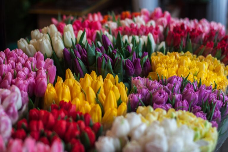 Beautiful Flowers With Their Meanings That Will Surprise You