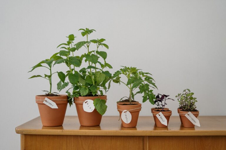 Choosing the Best Plants for Your Home – A Complete Guide